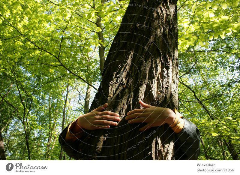 ich könnte heute Bäume ausreißen.... Wald Baum Lust Baumrinde stark Hand Freundschaft Umarmen Beschützer Retter Waldsterben Vertrauen Frühling Sommer Finger