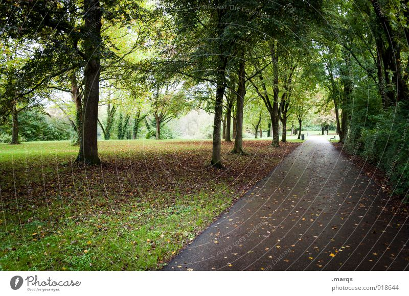 Herbst Ausflug Umwelt Natur Landschaft Baum Blatt Laubbaum Park Wiese Wege & Pfade kalt nass Stimmung Wandel & Veränderung Ziel geradeaus Farbfoto Außenaufnahme