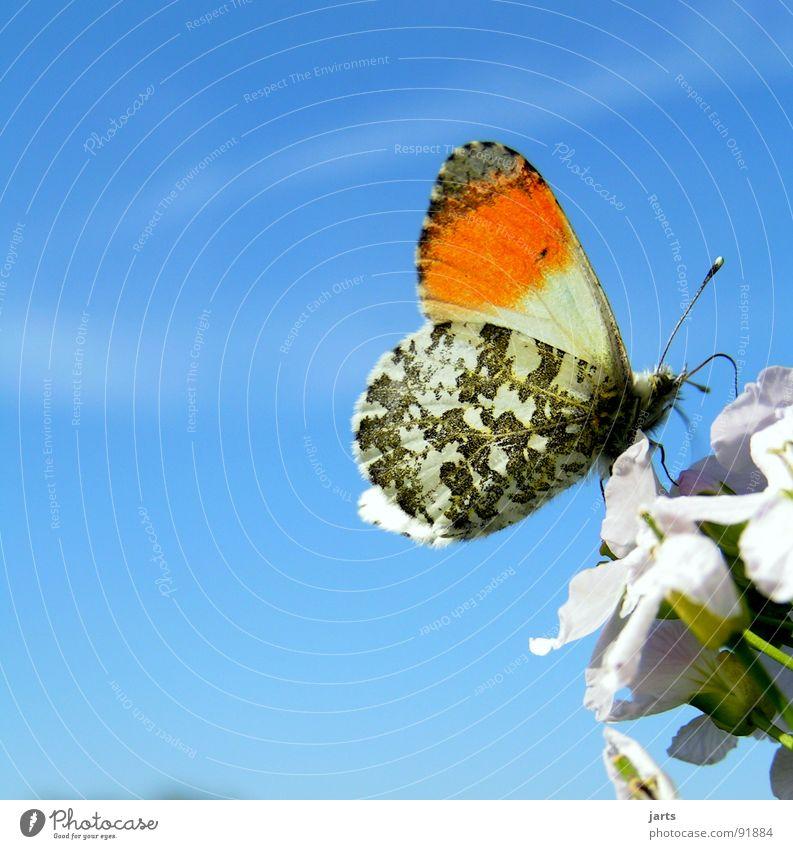 Schönes Ding, so`n Schmetterling Natur schön Himmel Blume blau Sommer Wiese Blüte Freiheit Flügel