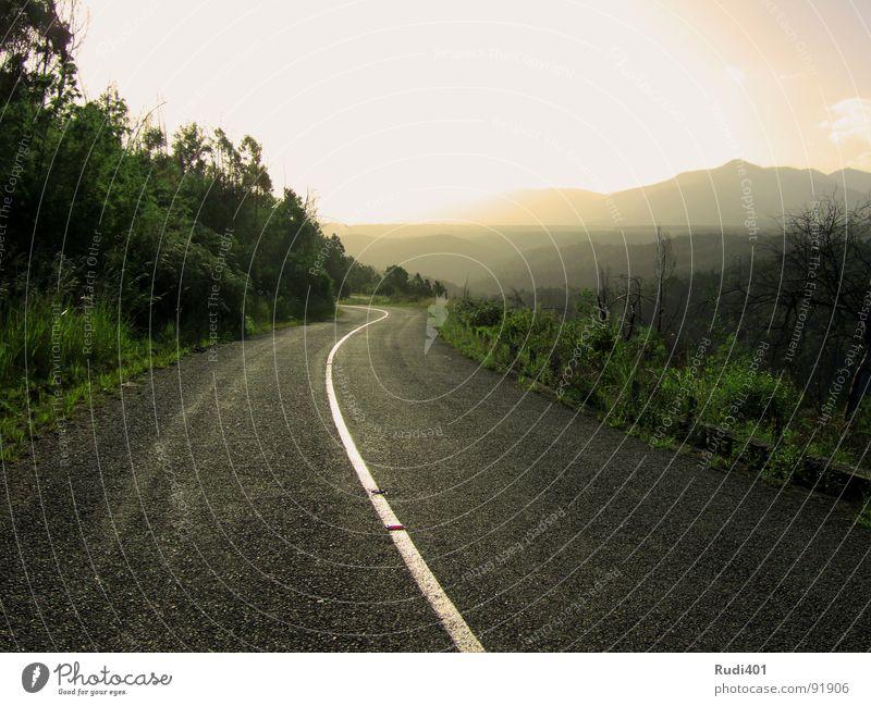 der sonne entgegen Natur Sonne grün Straße Berge u. Gebirge Wege & Pfade Südafrika Ziel Afrika Streifen vorwärts Verkehrswege gegen blenden Tsitsikamma National Park