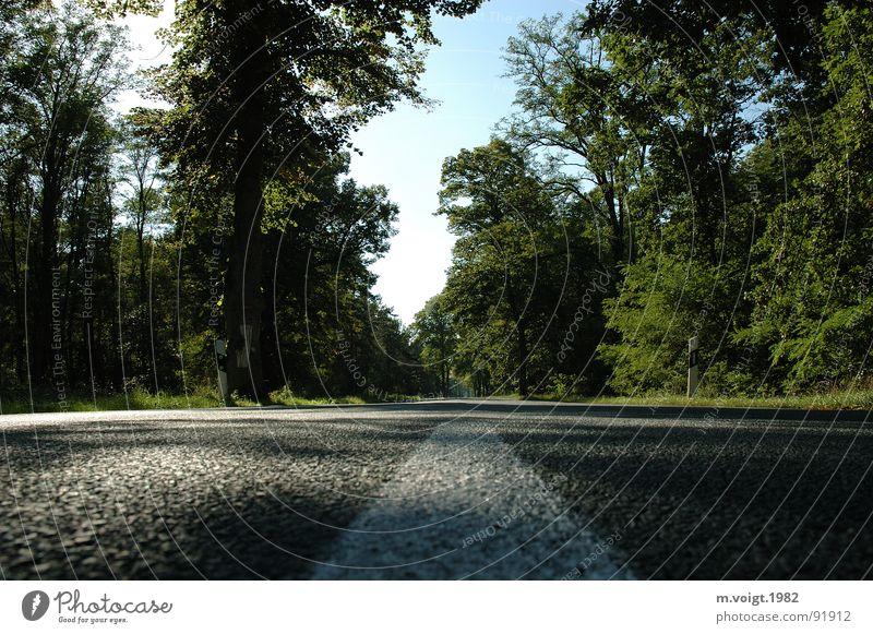 Gerade Baum Einsamkeit Ferne Straße Wald Wege & Pfade Landschaft leer Ziel Asphalt Idylle Mitte Richtung Verkehrswege Schönes Wetter gerade