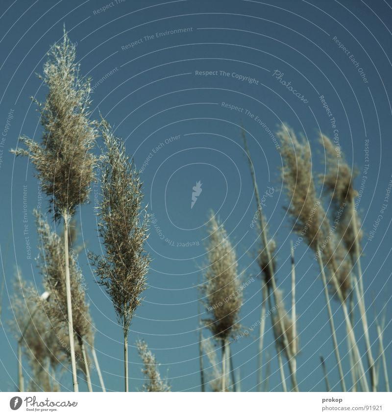 Wind: nicht halb, nicht ganz Himmel Natur schön Pflanze Erholung Einsamkeit Tier Küste See Luft Sträucher mehrere Dinge Vertrauen Zusammenhalt