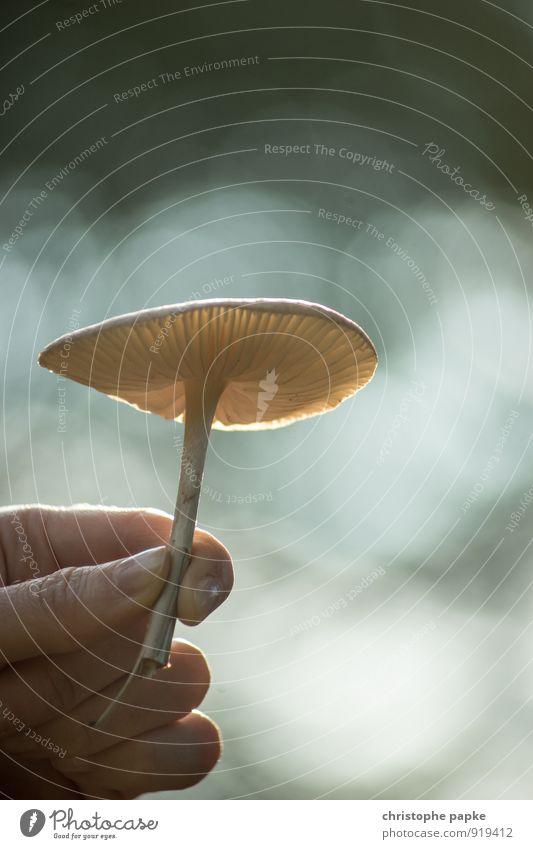 Schirmchen feminin Hand Umwelt Natur Pflanze Herbst Wildpflanze festhalten Wachstum Umweltschutz Pilz Pilzhut Pilzsucher Regenschirm Farbfoto Gedeckte Farben