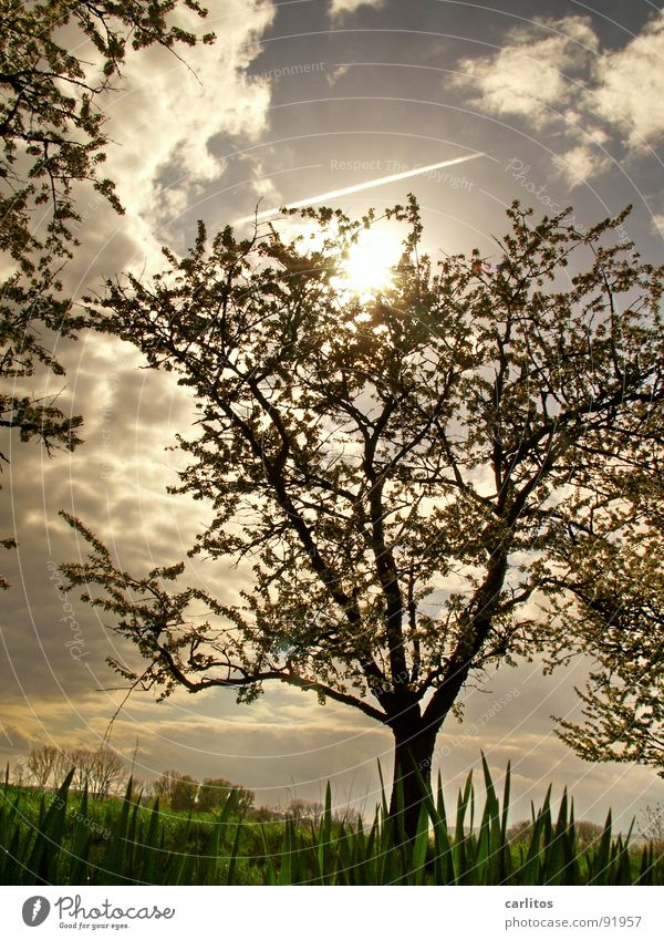 Baum again Blatt Wolken Frühling Blüte Stimmung Ausflug Spaziergang Blattknospe Rätsel Sauerstoff Blattgrün Photosynthese Obstbaum Bilderrätsel Feldmark