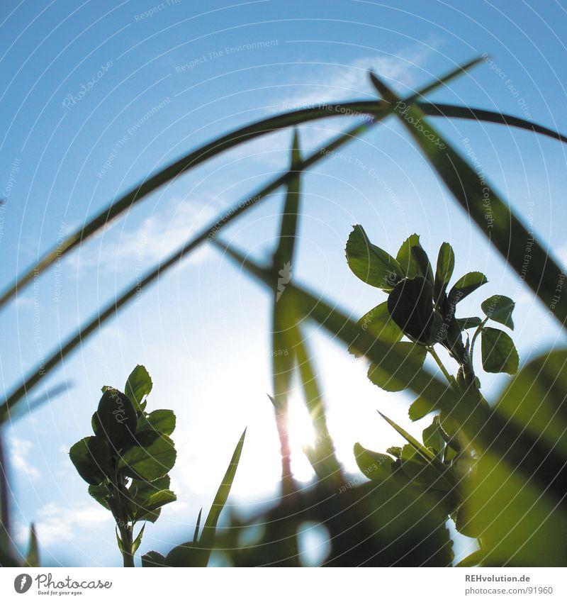 -krabbel-tier-aussicht- Himmel Sonne grün blau Sommer Wiese Gras Beleuchtung frisch liegen Halm saftig