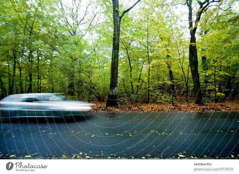 Dreitausendsechshunderteins Herbst Wald Laubwald Straße Straßenverkehr Geschwindigkeit Eile Termin & Datum PKW KFZ Rutschgefahr auquaplaning bedrohlich