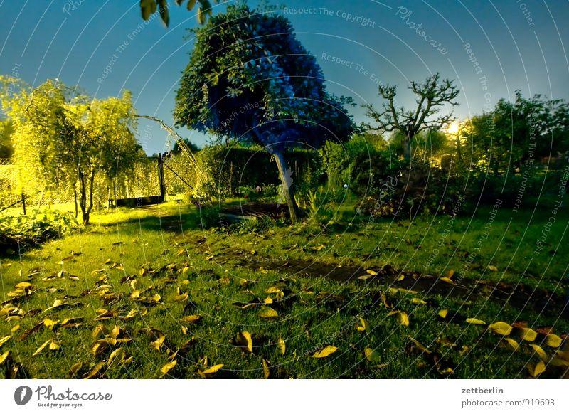 Abends im Garten ohne Herbst Schrebergarten Nacht dunkel Licht Laterne Straßenbeleuchtung Rasen Gras Blatt Baum geheimnisvoll Tatort Feierabend