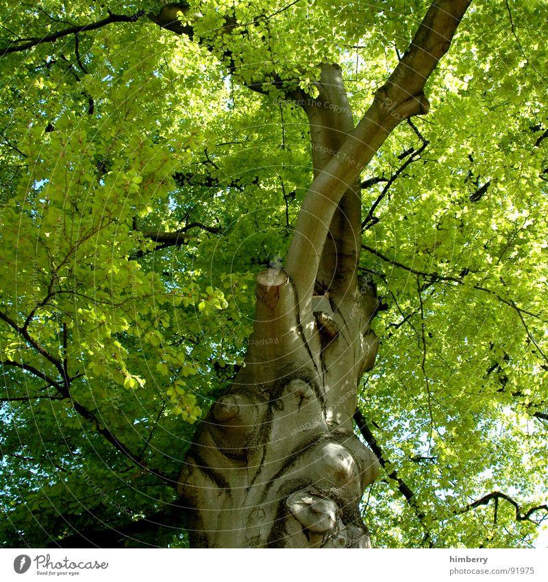 stammbaum II Baum grün Blatt Baumkrone Baumstamm Baumstruktur Gartenbau Frühling Park Natur Ast Landschaft Zweig Aktien