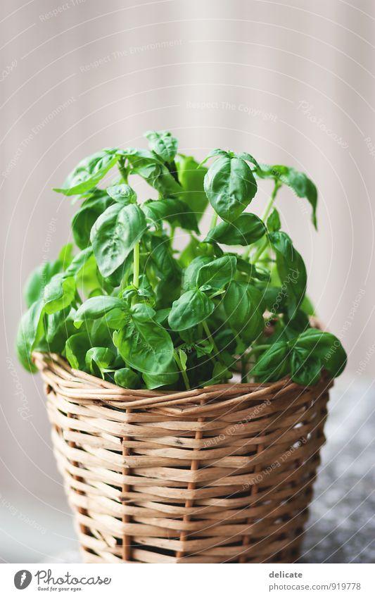 Basilikum Lebensmittel Kräuter & Gewürze Kräutergarten Pflanze Ernährung Bioprodukte Vegetarische Ernährung Italienische Küche Grünpflanze Blühend Duft Essen