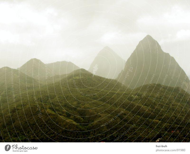 Nabelschwaden Wolken Urwald Baum grün Wald berühren Hügel Einsamkeit groß Macht steil Bergsteigen Berge u. Gebirge Landschaft Nbele hoch Niveau Himmel Freiheit