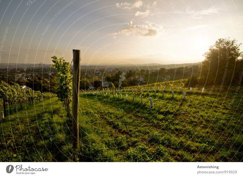 Weinbau Umwelt Natur Landschaft Pflanze Luft Himmel Wolken Horizont Sonne Sonnenaufgang Sonnenuntergang Sonnenlicht Herbst Wetter Schönes Wetter Baum Gras