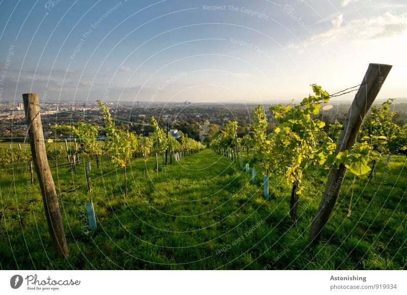 zwischen dem Wein Umwelt Natur Landschaft Pflanze Luft Himmel Horizont Sonne Herbst Wetter Schönes Wetter Sträucher Nutzpflanze Hügel Wien Österreich Hauptstadt