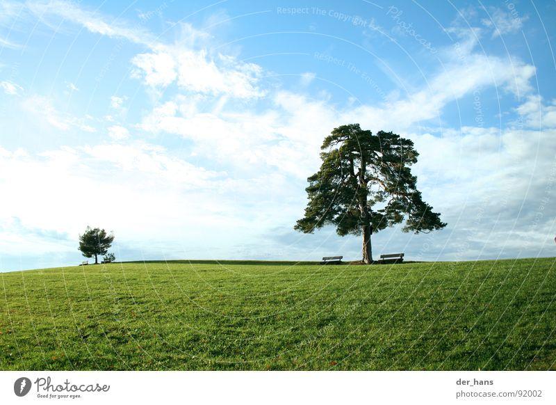 Der Größenunterschied Natur Baum Sommer Wiese Landschaft Blauer Himmel einheitlich