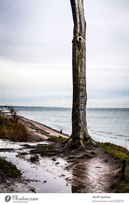 Die Kralle von der anderen Seite... Natur Ferien & Urlaub & Reisen alt Pflanze Baum Meer Landschaft Wald Umwelt Herbst Küste Wege & Pfade Freiheit