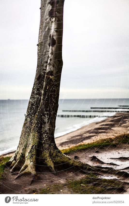 Die Kralle von... Natur Ferien & Urlaub & Reisen Pflanze Baum Meer Landschaft Strand Ferne Umwelt Herbst Gefühle Küste Freiheit Stimmung Wellen Tourismus