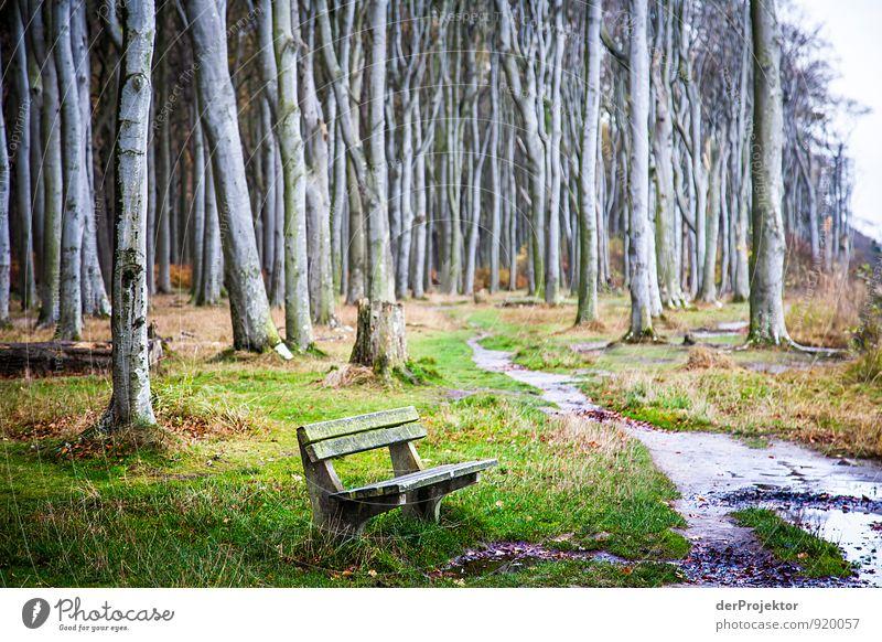 Und im Walde still... Natur Ferien & Urlaub & Reisen Pflanze grün Wasser Baum Landschaft ruhig Wald Umwelt Herbst Gefühle Küste Wege & Pfade Freizeit & Hobby Tourismus