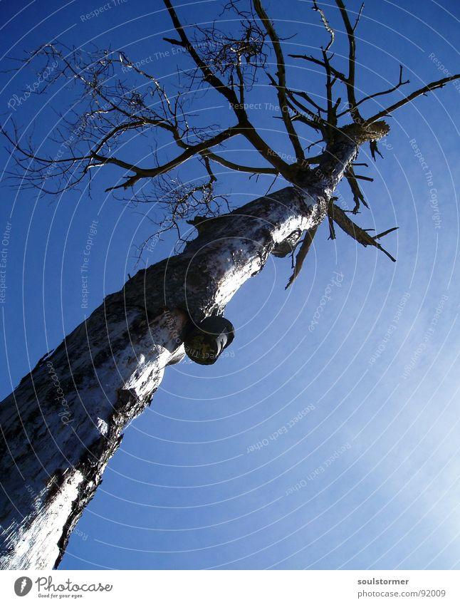 Straight into the Sky alt Himmel Baum Wolken Einsamkeit Tod verrückt Ende Ast aufwärts Futterhäuschen