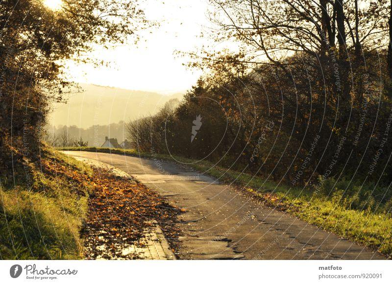 Blätter auf dem Bürgersteig Natur Sonne Baum Blatt Umwelt Straße Herbst Wege & Pfade Stimmung bedrohlich Verkehrswege Herbstlaub