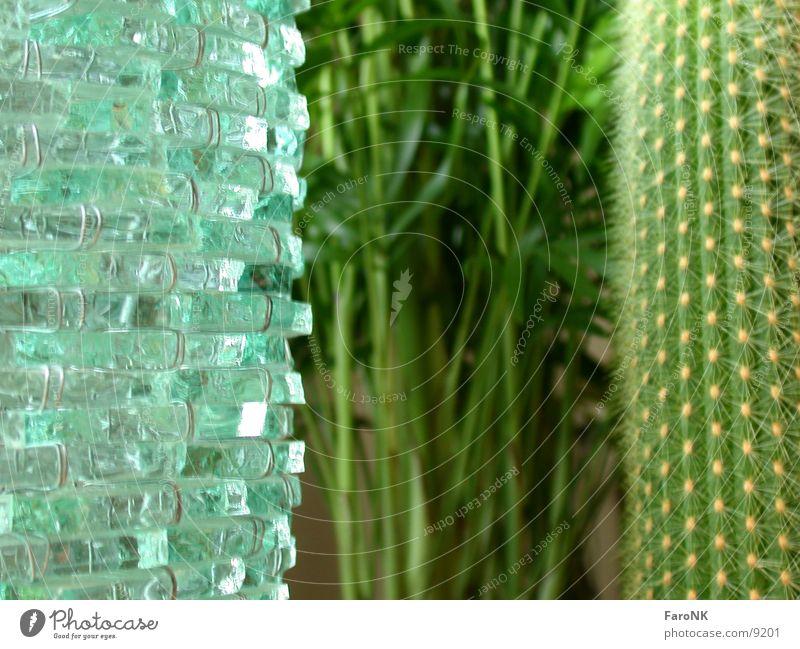 Drei Pflanze Glas Palme Kaktus