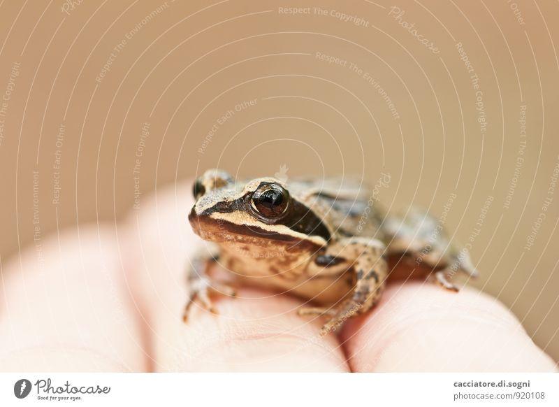 Kleiner kalter Freund Hand Finger Tier Wildtier Frosch 1 beobachten Blick sitzen einfach frech Freundlichkeit Fröhlichkeit klein nah nass Neugier niedlich