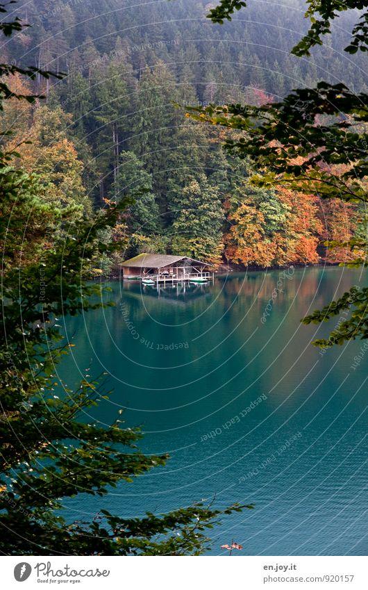 beobachten Ferien & Urlaub & Reisen Tourismus Ausflug Abenteuer Natur Landschaft Herbst Klima Wetter Wald See Alpsee entdecken Erholung grün orange türkis