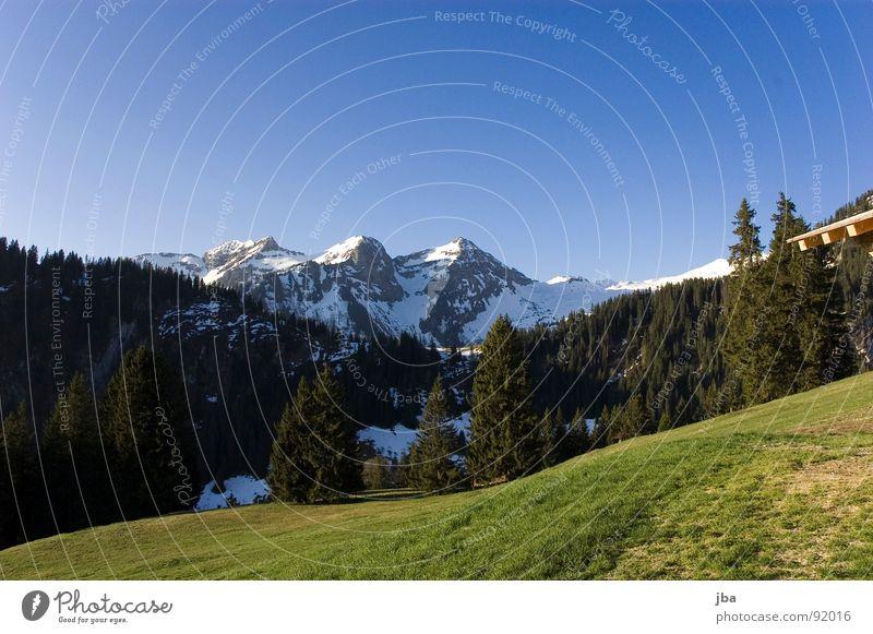 Frühling in den Bergen Alm Schneeberg Wald Tanne Wiese Gras Berghang schön Schweiz authentisch Berge u. Gebirge Skipiste Weide Bergrücken Schatten Himmel blau