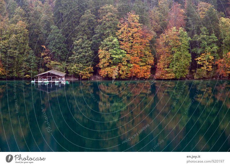 Haus am See Natur Ferien & Urlaub & Reisen grün Farbe Erholung Landschaft ruhig Wald Herbst See orange Tourismus Klima Ausflug Abenteuer Romantik