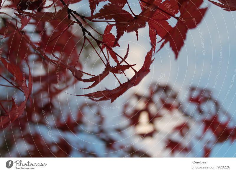 Herbstblätter Natur blau rot Blatt ruhig Wald Herbstlaub