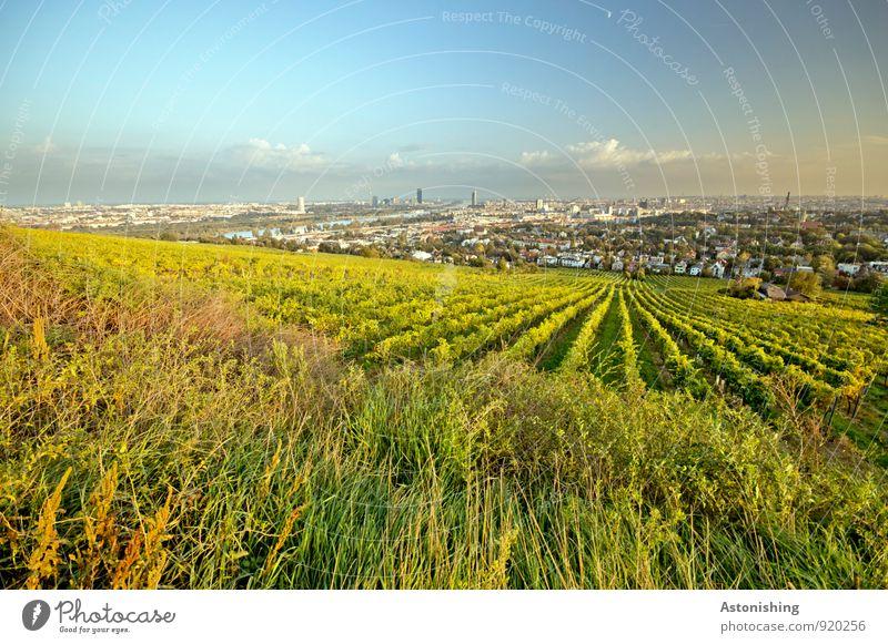 Wein vor Wien Himmel Natur blau Stadt Pflanze grün Landschaft Wolken Haus Umwelt gelb Herbst Wiese Gras hell Horizont