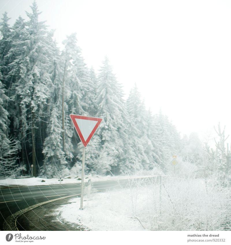 SCHILD Umwelt Natur Wolken Winter schlechtes Wetter Schnee Schneefall Baum Wald Verkehr Verkehrswege Straßenverkehr Straßenkreuzung Verkehrszeichen