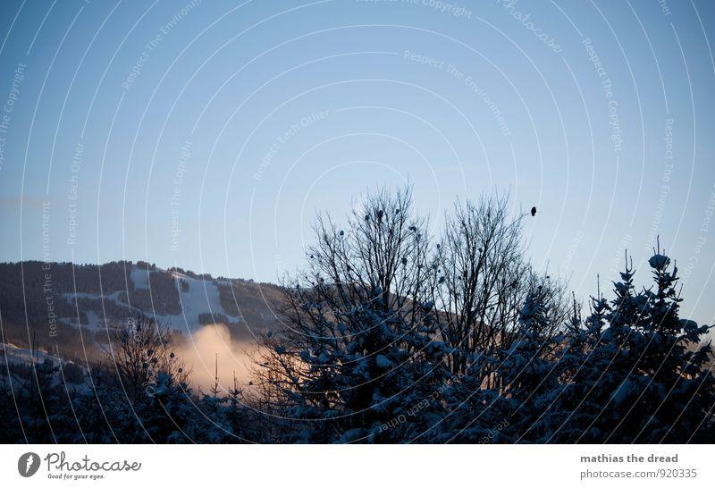 GUTEN MORGEN Umwelt Natur Landschaft Wolkenloser Himmel Horizont Winter Schönes Wetter Schnee Schneefall Baum Wald Alpen Berge u. Gebirge Gipfel Tier Vogel