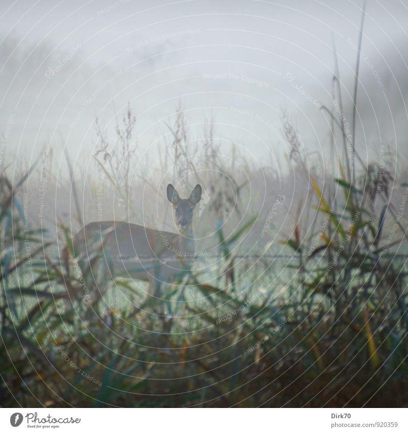 Die Lauscher aufgestellt, fluchtbereit Natur grün Baum Tier Herbst Wiese feminin Gras grau braun Wetter Feld Angst Nebel Wildtier Sträucher