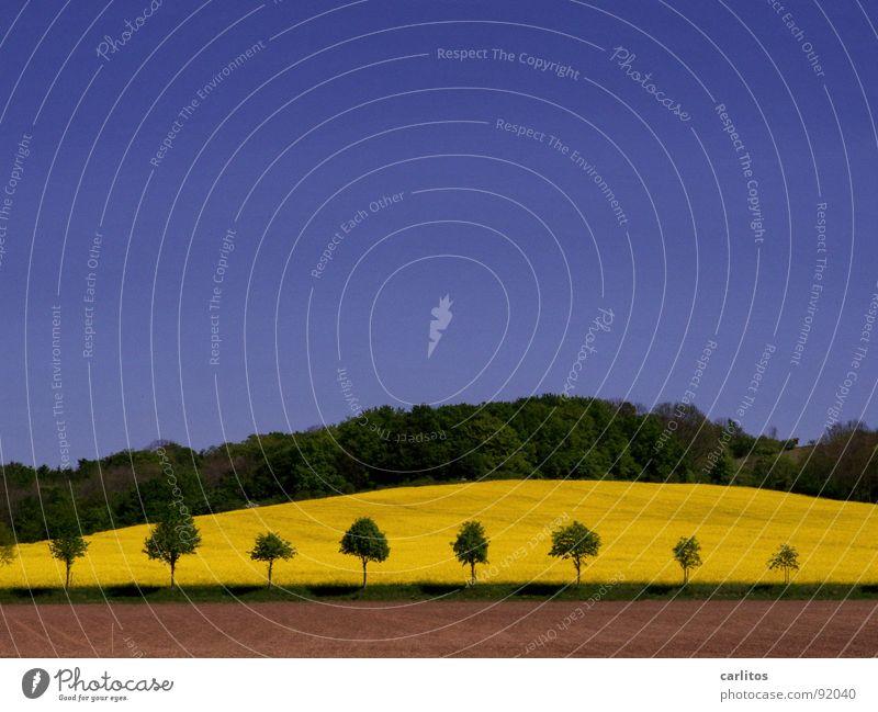 Heile Welt am Sonntag braun grün Baum Raps Wald dunkelgrün Hügel Frühling Erde Himmel Blauer Himmel Klarer Himmel Wolkenloser Himmel himmelblau Schönes Wetter