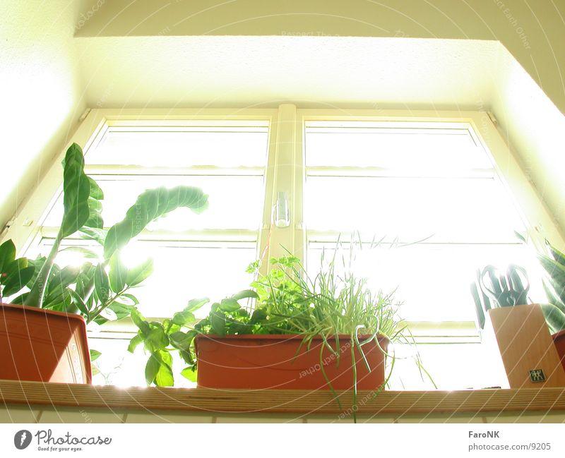 Fenster Küche Häusliches Leben Pflanze Glas Fensterscheibe