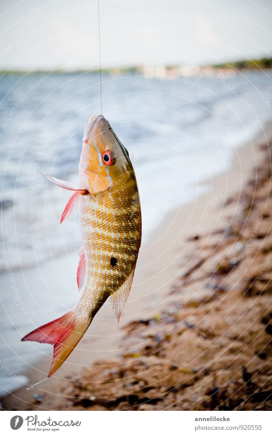 Schöner Fang Lebensmittel Fisch Ernährung Sushi Freizeit & Hobby Angeln Ferien & Urlaub & Reisen Tourismus Ausflug Sommer Sommerurlaub Strand Meer Wellen