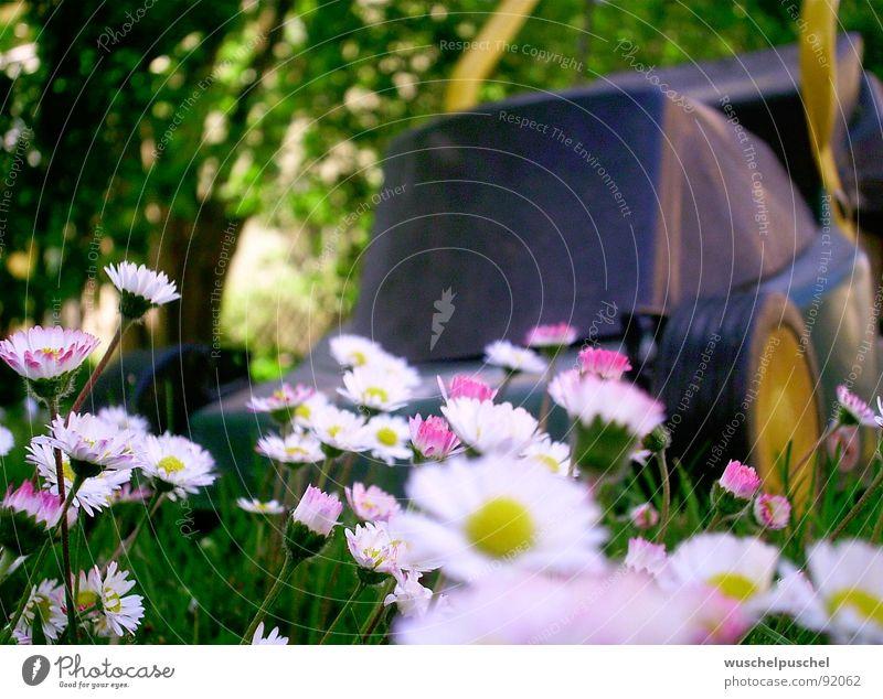 KEIN ENTKOMMEN Rasenmäher Gänseblümchen grün gelb weiß Frühling Garten Angst Außenaufnahme