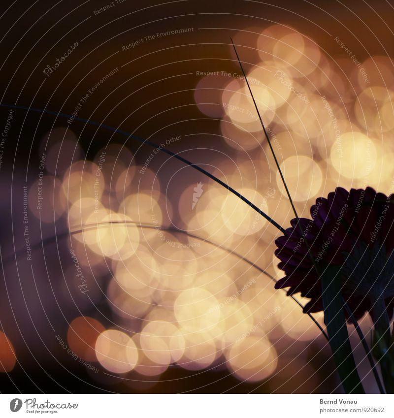hochzeit schön Dekoration & Verzierung Feste & Feiern Hochzeit Blume Blüte rund orange schwarz Stimmung Kreis Blende Geometrie Zacken Halm Bogen grau
