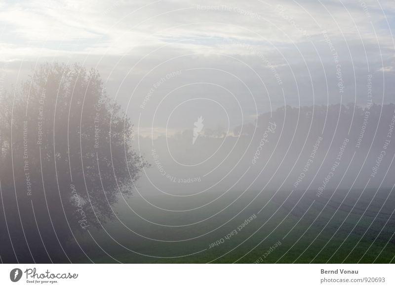 Herbstmorgen schön Natur Landschaft Himmel Wolken Horizont Wetter Nebel Baum Wiese Feld Wald blau grau grün Jahreszeiten trüb Blick Silhouette Furche