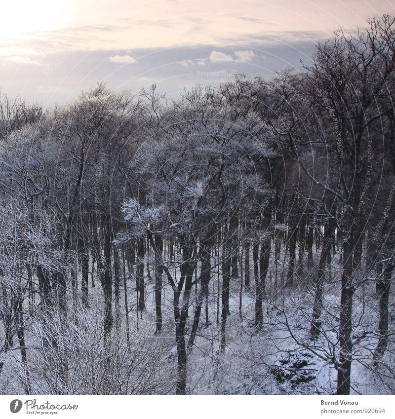 Winterwald Sonne Schnee Natur Landschaft Himmel Wolken Wetter Sträucher Wald kalt oben blau grau weiß Baumstamm Ast Jahreszeiten Tiefenschärfe bedeckt verträumt