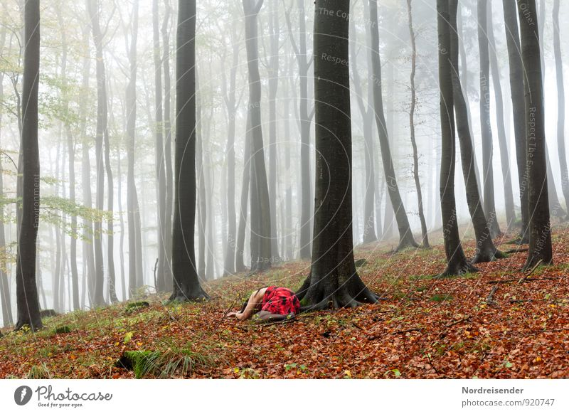 Rotkäppchen..... Ausflug Mensch feminin Frau Erwachsene Natur Landschaft Urelemente Klima Wetter schlechtes Wetter Nebel Regen Baum Wald Kleid liegen