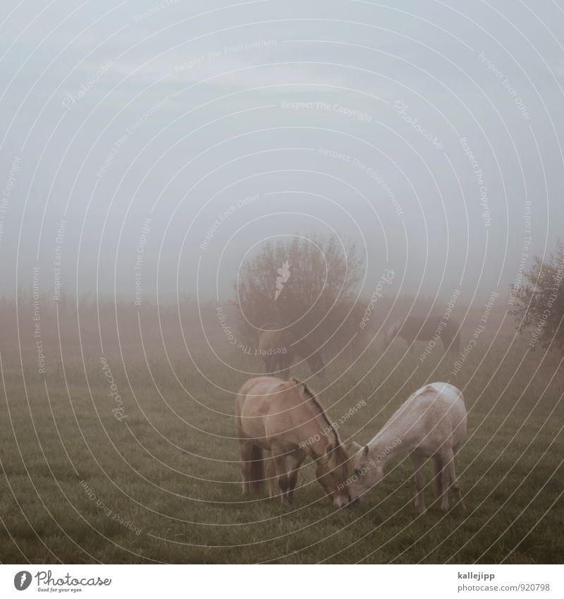 futterneid Umwelt Natur Landschaft Pflanze Tier Horizont Herbst Nebel Wiese Feld Nutztier Pferd 2 Herde Fressen Weide Grasland Brandenburg Morgennebel ruhig