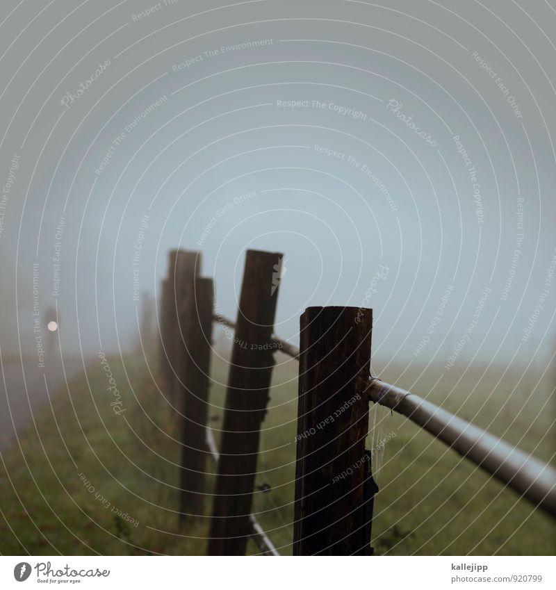 blindflug Mensch 1 Umwelt Natur Landschaft Pflanze Tier Herbst Klima Nebel Verkehr Verkehrsmittel Verkehrswege Fahrradfahren Straße leuchten Fahrradweg Zaun