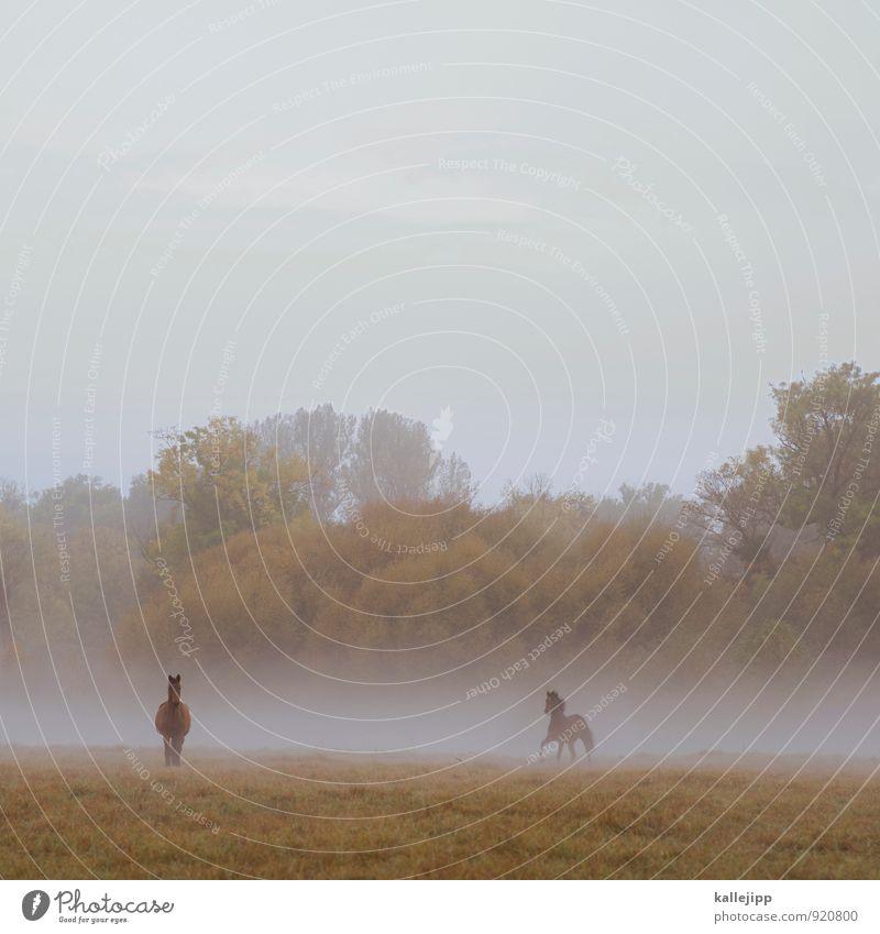 2 ps Umwelt Natur Landschaft Pflanze Tier Wassertropfen Herbst Wetter Nebel Baum Wiese Wald Nutztier Pferd grün galoppieren Morgennebel Kitsch Farbfoto