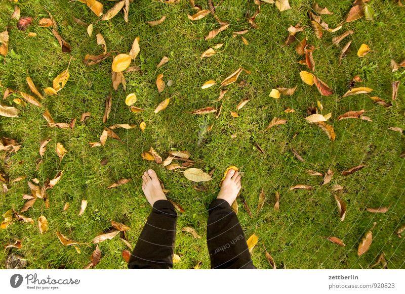 Stehen am Textfreiraum Garten Herbst Schrebergarten Wiese Rasen Gras Blatt Herbstlaub mehrfarbig stehen Fuß nackt Zehen Vogelperspektive Mensch standhaft warten