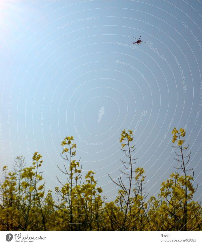 helifield Himmel Sonne blau gelb Frühling Luftverkehr Käfer Raps Hubschrauber Rapsfeld