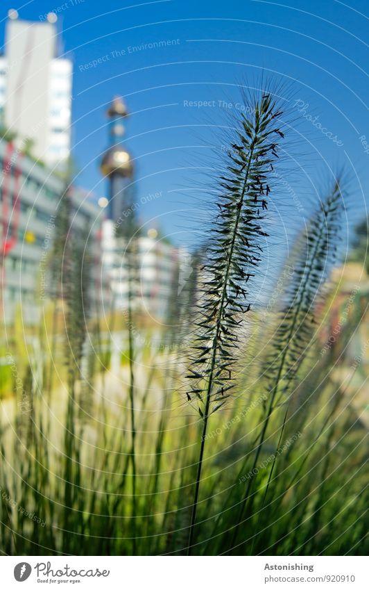 Türme Umwelt Natur Pflanze Himmel Wolkenloser Himmel Sommer Wetter Schönes Wetter Gras Wiese Wien Österreich Stadt Hauptstadt Haus Hochhaus Turm Bauwerk Gebäude