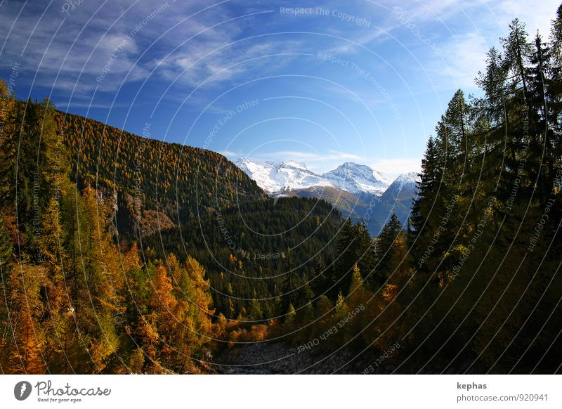 Das einzig Gute am Herbst ... Ferien & Urlaub & Reisen Berge u. Gebirge wandern Landschaft Himmel Wald Alpen Schneebedeckte Gipfel blau gelb gold Stimmung