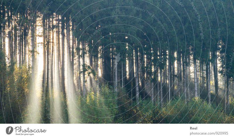 Ein Licht geht auf Natur Ferien & Urlaub & Reisen Pflanze schön grün Wasser Sommer Sonne Landschaft Wald Herbst Frühling glänzend Nebel wandern fantastisch