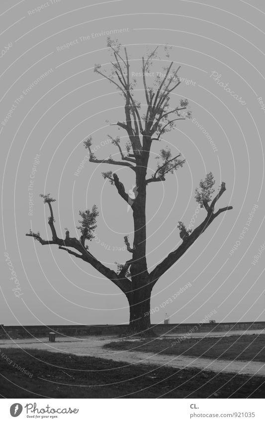 ruhe nach dem sturm Natur Baum Einsamkeit Landschaft ruhig dunkel Umwelt Traurigkeit Wege & Pfade Park Wetter Kraft trist Nebel Wind Klima