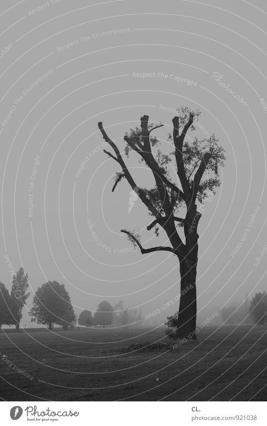 stehen geblieben Umwelt Natur Landschaft Himmel Klima Klimawandel Wetter schlechtes Wetter Unwetter Wind Sturm Nebel Baum Park Wiese Düsseldorf Menschenleer